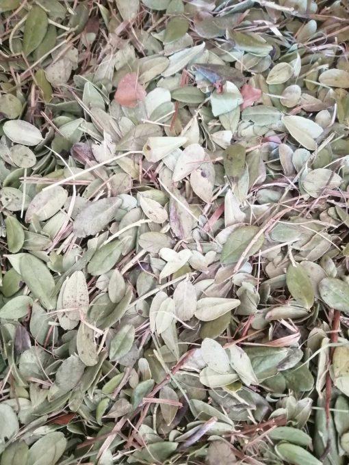 червена боровинка лист