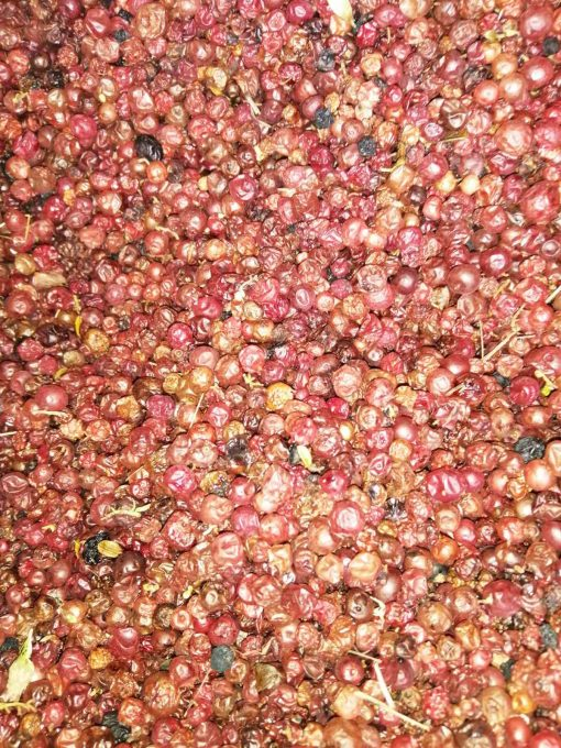 червена боровинка плод