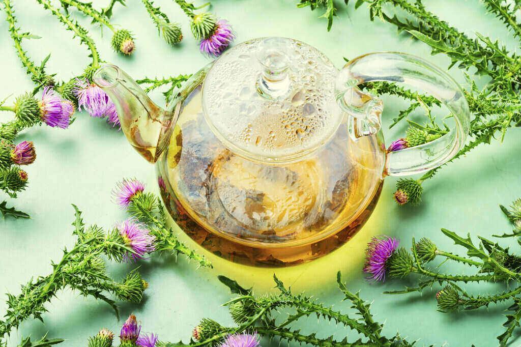 Чай със Бял равнец