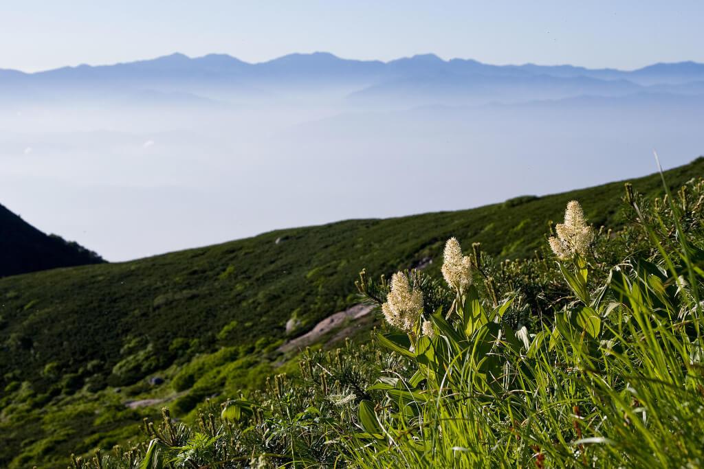 Чемерика в планината отблизо