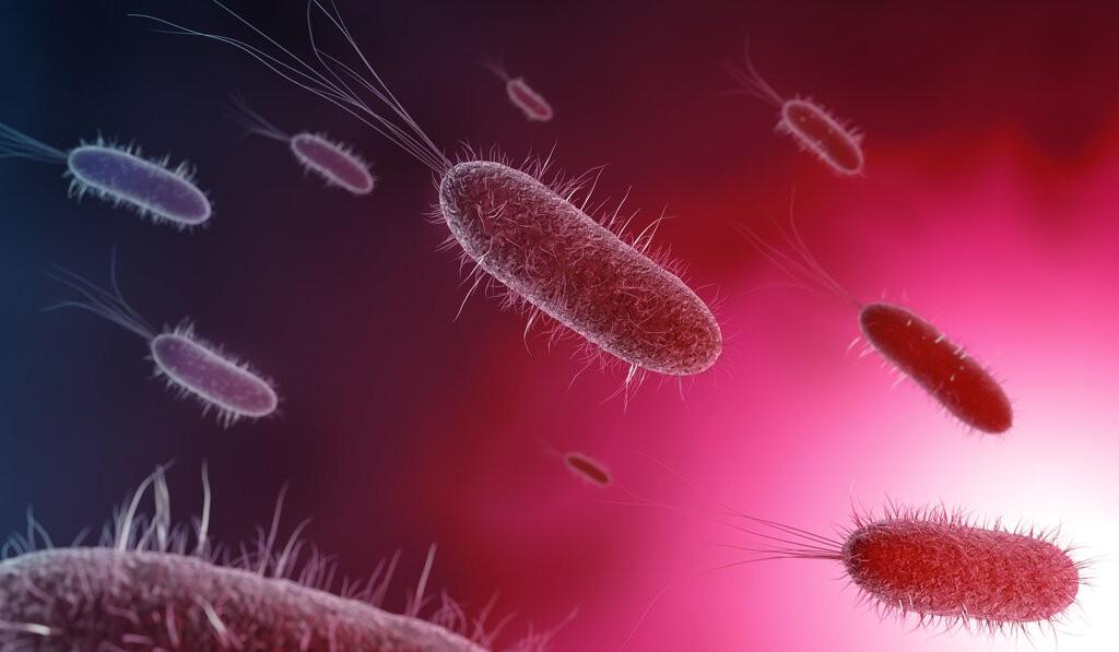 Бактерия на червен фон