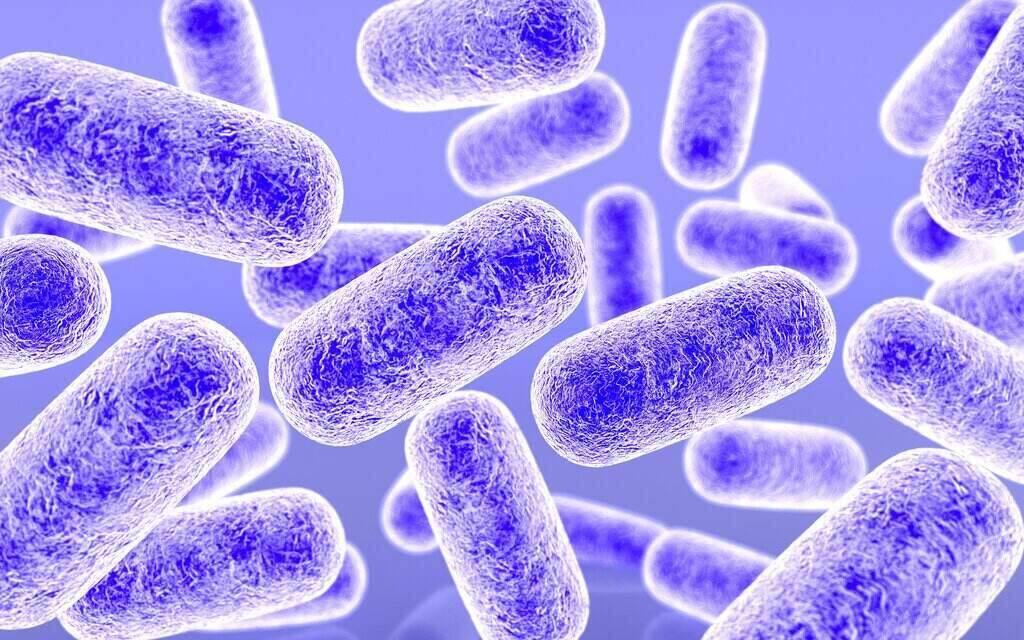 Бактерия под микроскоп