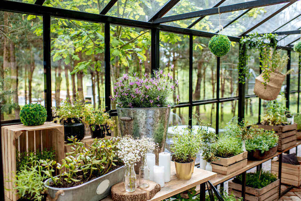 Разнообразие от билки в оранжерия