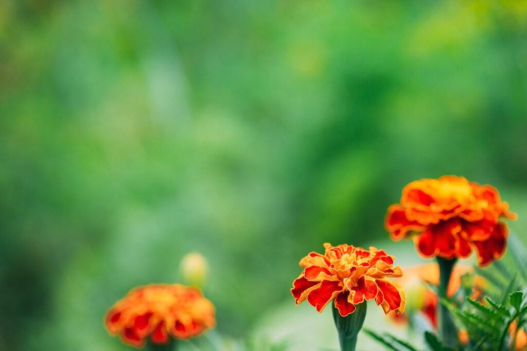 Червени цветя Турта