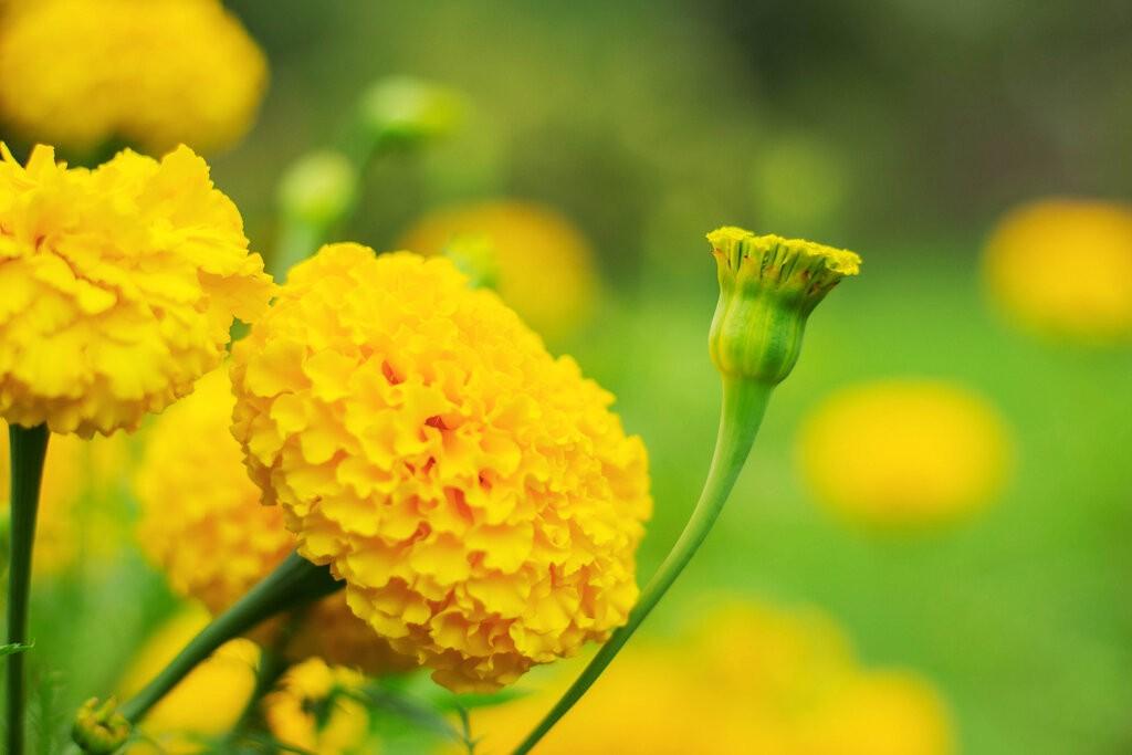 Красиви жълти цветя Турта