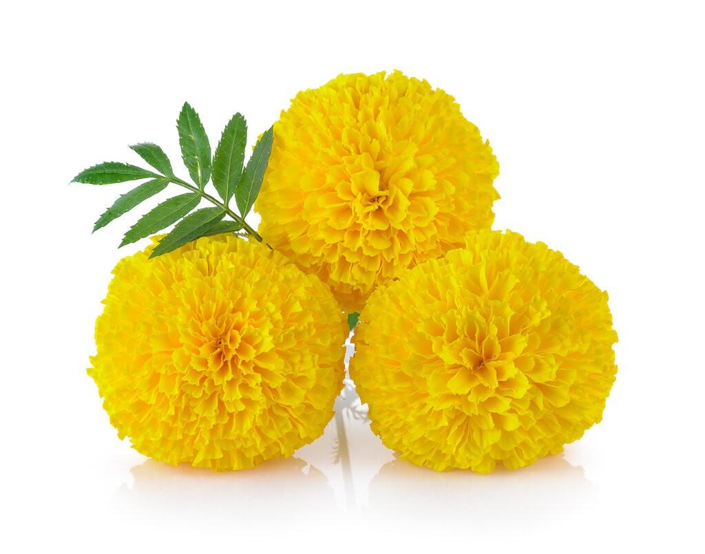 Жълти цветя Турта на бял фон