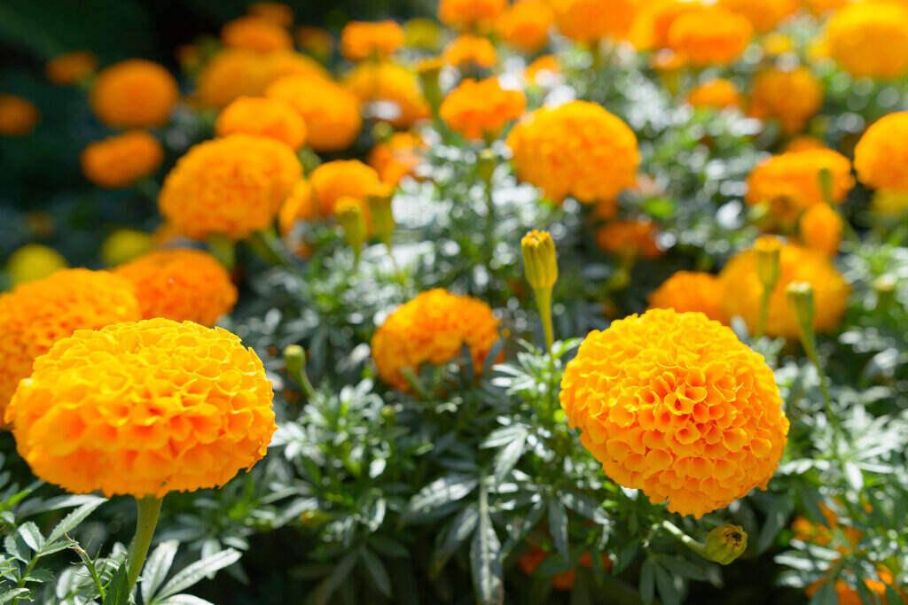 Портрет на цветя Турта
