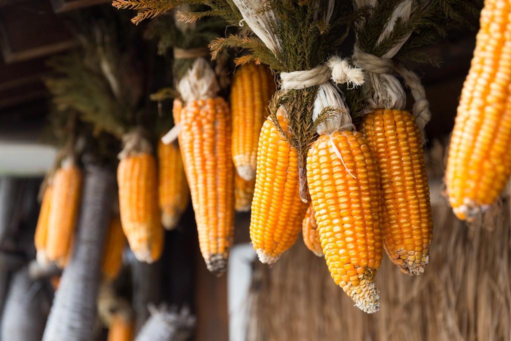 Сушена царевица