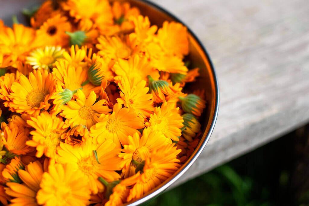 Прясно набрани цветя от Невен