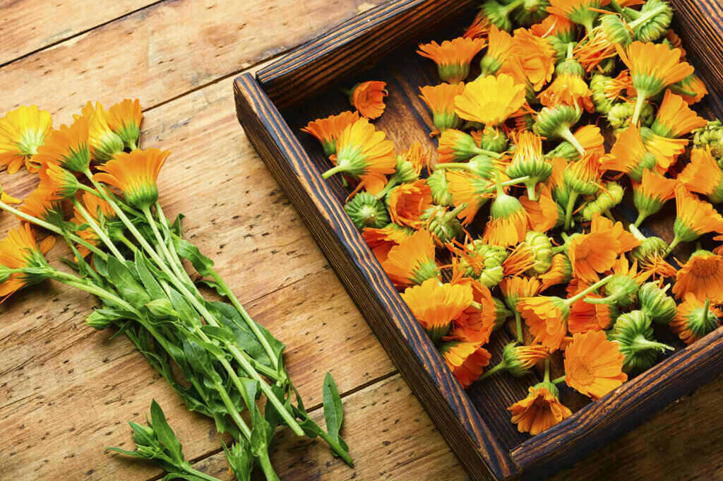 Цветя и цветове Невен в кутия