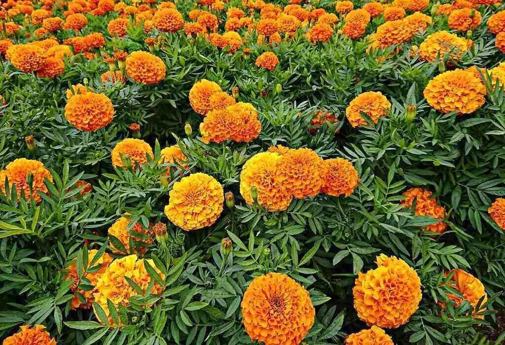 Жълти и оранжеви цветя Турта