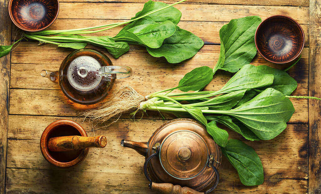 Живовляк и чай на дървена маса